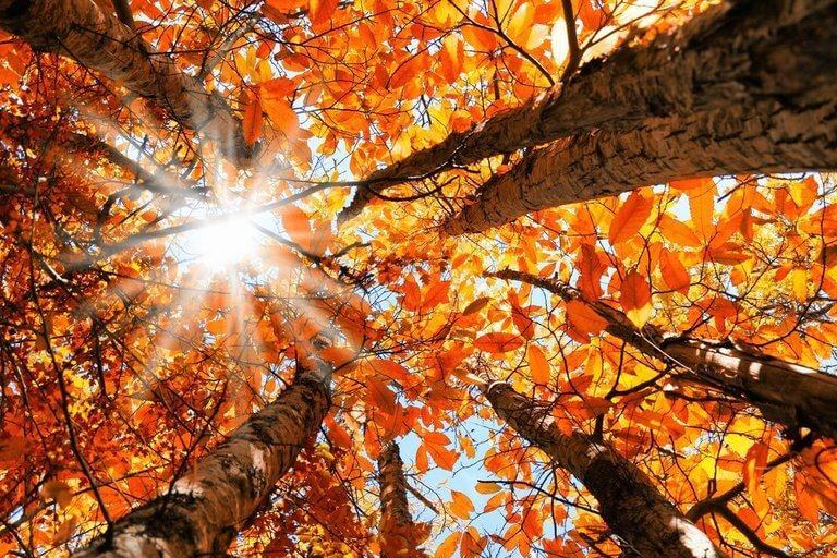 Jesen u staračkom domu Arija